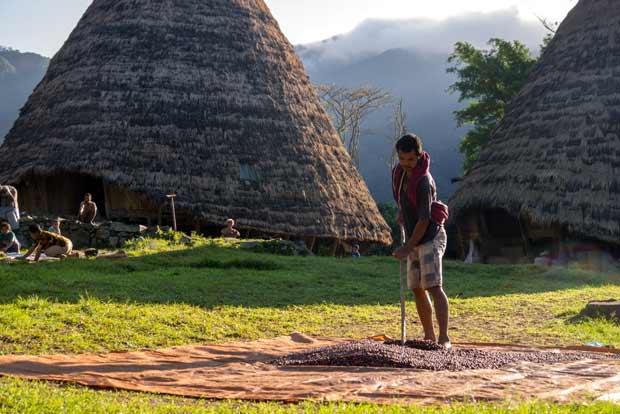 Un homme étale les grains de café au sol pour qu'ils sèchent aux premiers rayons de soleil - crédits Antoine Dubois