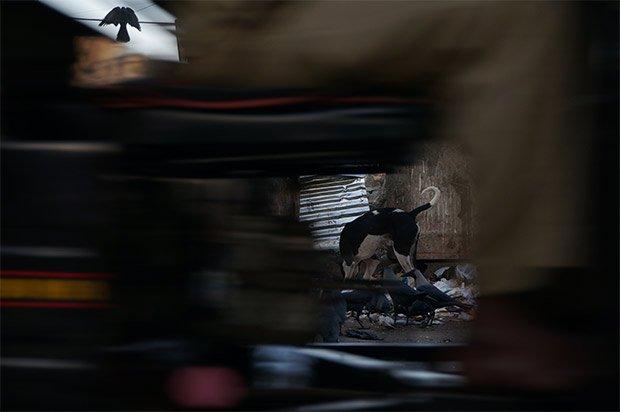 Instantané de Mumbai. Un rickshaw passe devant un chien errant et un corbeau affairés sur un tas de détritus, condensé des maux emblématiques de la ville. Crédits : Clément Pairot