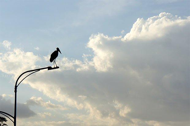 Marabout-perche-reverbere-batiment