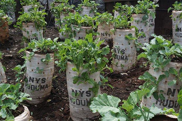 agriculture-urbaine-biodiversite
