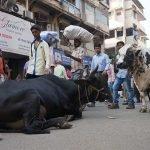 vache paysage urbain Mumbai