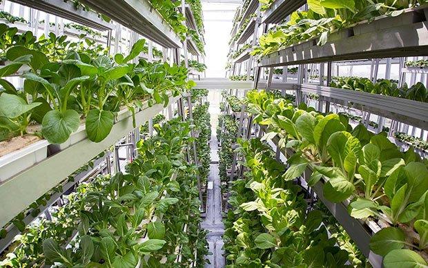 Une ferme hydroponique verticale à Singapour