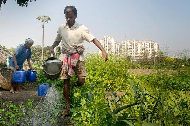 Homme dans une ferme urbaine à Calcutta