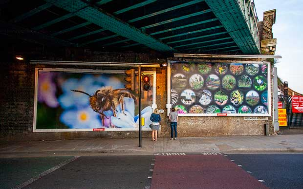 La ville est perçue comme un refuge possible pour les abeilles.
