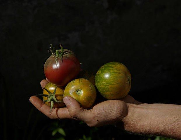 Photo de tomates coeur de boeuf tenues dans une main