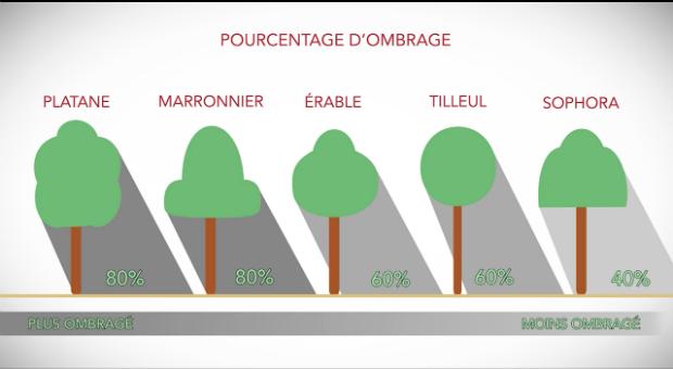 Pourcentage d'ombrage des différents catégories d'arbres
