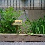 Des potagers urbains peuvent se développer dans nos ruelles.