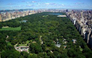 Central Park est considéré à l'échelle de New-York comme son « poumon vert »