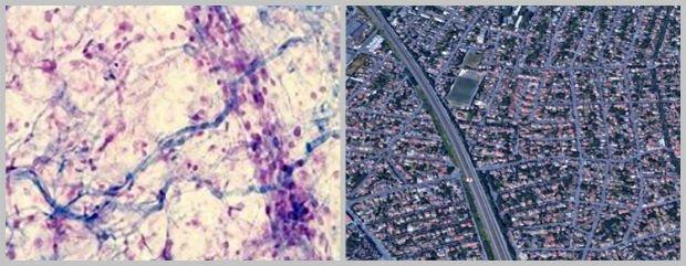 Les voies de circulations peuvent être assimilées au réseau sanguin, ou comme ici, au tissu conjonctif