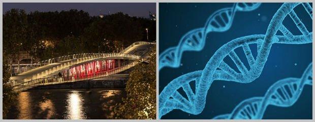 Quand l'architecture et la biologie ne font plus qu'un
