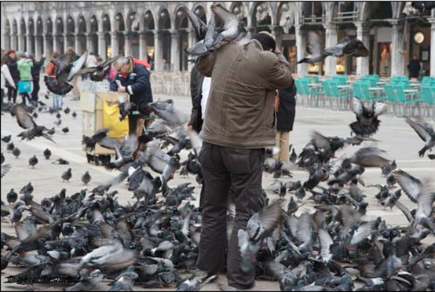 Les oiseaux en ville, entre vision horrifique et nécessité d'accueillir ces espèces
