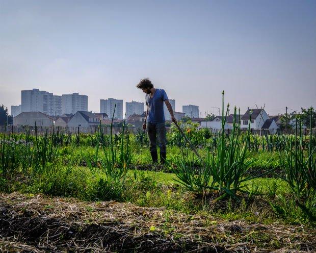 Une exploitation agricole à Saint-Denis, au fond, l'urbanisme pavillonnaire puis l'urbanisme des grands ensembles