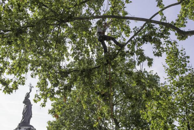 Dans les coulisses des arbres parisiens