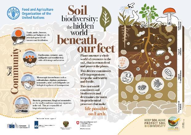 Affiche FAO pour le sol