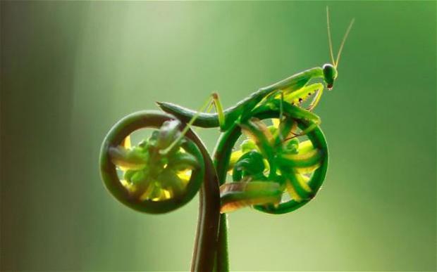 biomimetisme