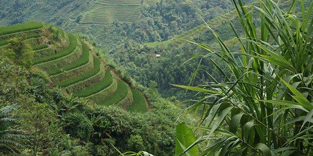 Terrasses Vietnamienne - Ha Giang ; Photographe : Clément Pairot