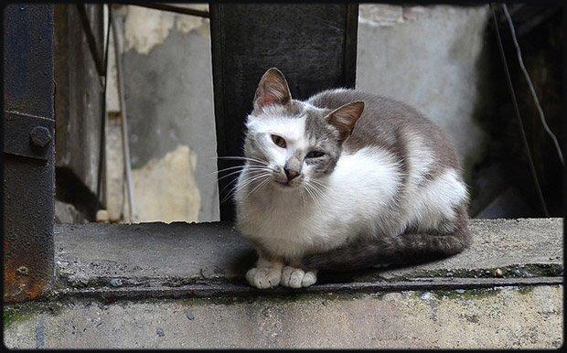 chat poil biodiversité