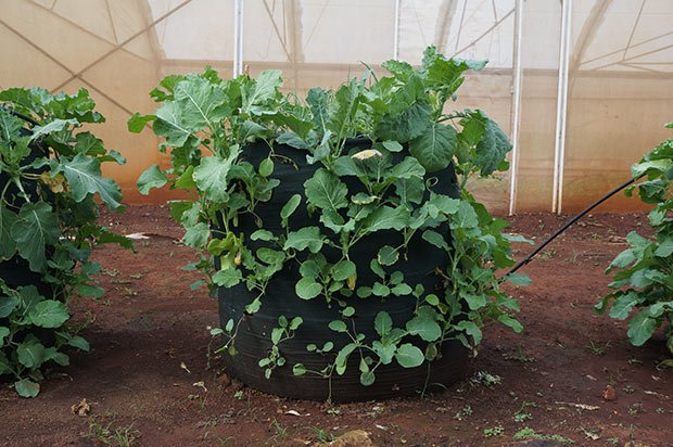 agriculture-nairobi-urbaine-biodiversite