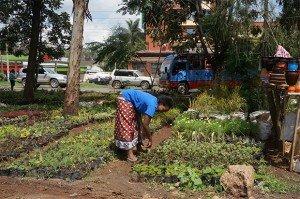 agriculture-urbaine-nairobi-biodiversite