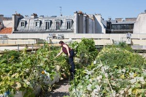 pariculteurs aménagement urbain biodiversite