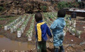 nairobi-agriculture-Mathare-urbaine-biodiversite