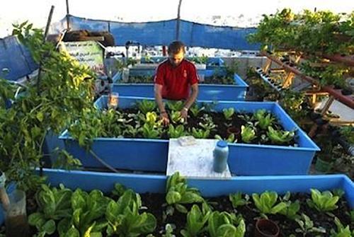 ferme urbaine nourriture gaza