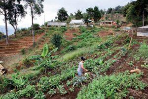 Sur une colline de Medellín, dans un quartier informel de la ville, les habitants ont planté un potager : une façon pour eux de se rattacher à leur passé rural et de s'assurer une production alimentaire