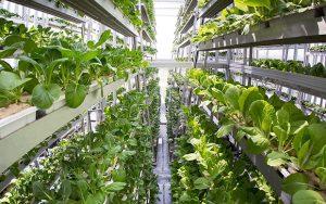 Une ferme hydroponique verticale a Singapour