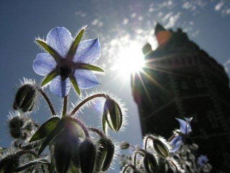 biodiversité ville fleurs