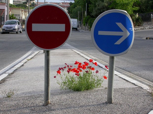 panneaux de signalisation coquelicot en ville