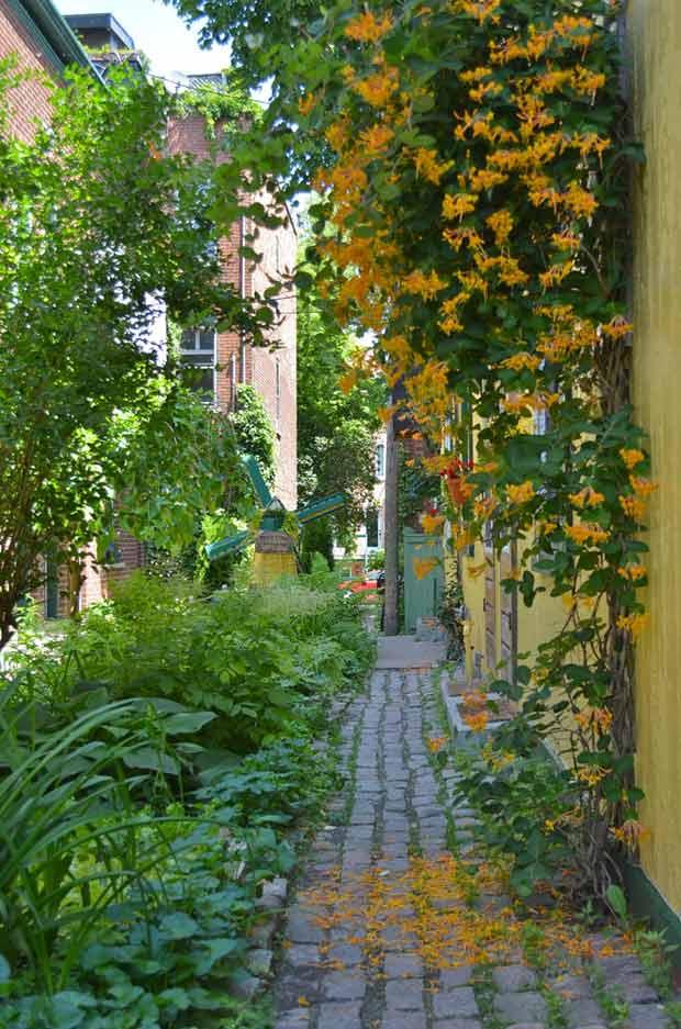 Une rue vegetalisee est source de convivialite et de partage