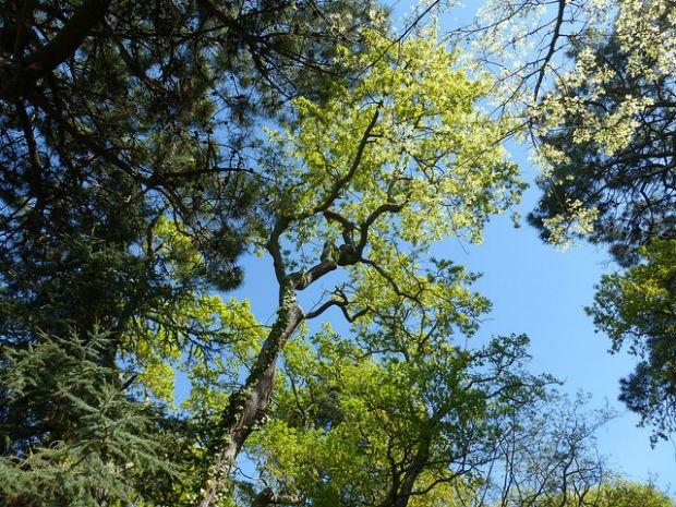 Les arbres, poumons des villes